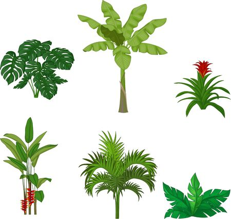 Vector illustration of Set of tropical plants on white background  イラスト・ベクター素材