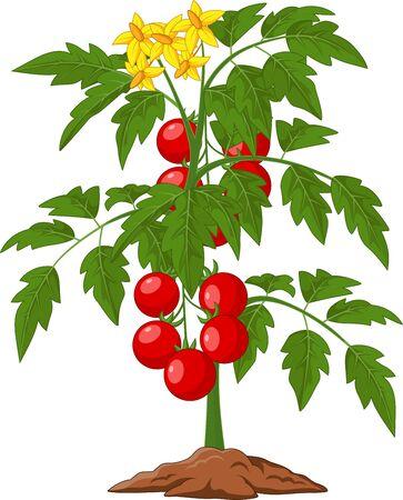Vectorillustratie van Cartoon tomatenplant geïsoleerd op witte afbeelding