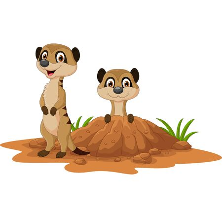 Vector illustration of Cartoon two meerkats on white background