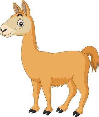 Vector illustration of Cartoon Llama on white background