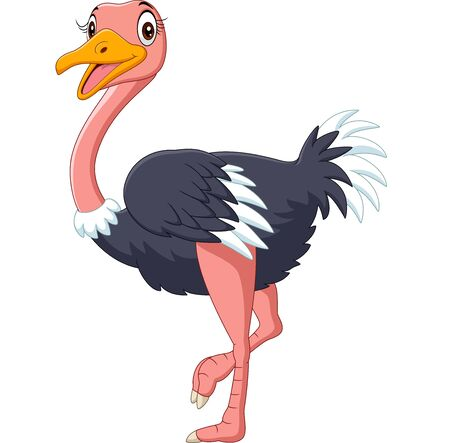 Vector illustration of Cute ostrich cartoon on white background