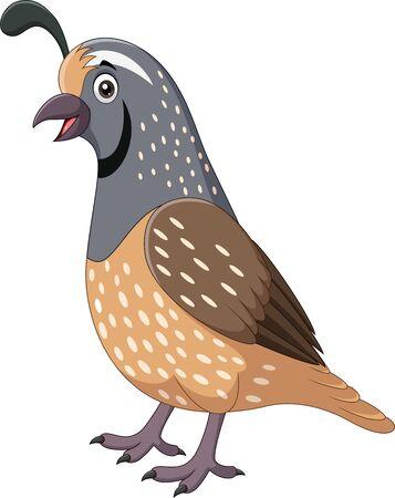 Illustration vectorielle de dessin animé souriant oiseau caille sur fond blanc