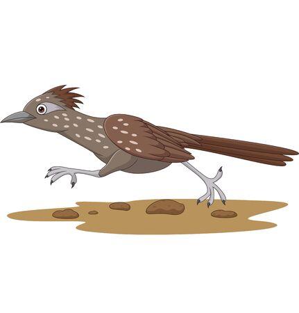 Vector illustration of Cartoon Roadrunner bird running on the road Vector Illustration