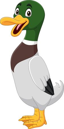 Vector illustration of Cute duck cartoon on white background