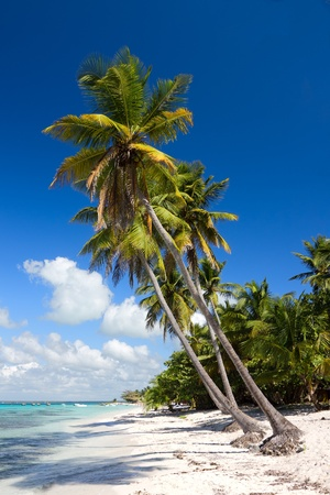 Palm trees on the tropical beach, Saona Island, Caribbean Sea, Dominican Republic Stock Photo - 12113859