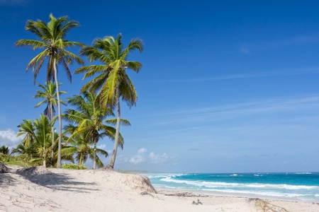 tranquil scene: Palm trees on the tropical beach, Bavaro, Punta Cana, Dominican Republic  Stock Photo
