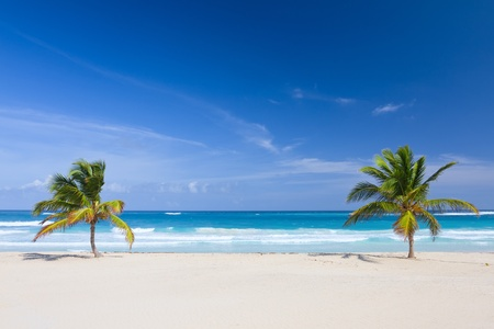 dominican: Two palm trees on the tropical beach, Bavaro, Punta Cana, Dominican Republic
