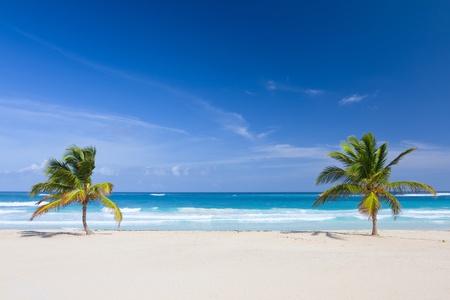 Zwei Palmen am tropischen Strand, Bavaro, Punta Cana, Dominikanische Republik