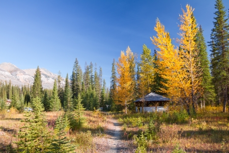 british weather: Sunny day of autumn in Kootenay National Park, British Columbia, Canada  Beautiful landscape with yellow trees and mountains Stock Photo
