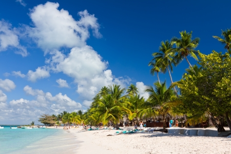 caribbean island: Palm trees on the tropical beach, Saona Island, Caribbean Sea, Dominican Republic