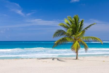Coconut Palm Tree on the Tropical Beach, Bavaro, Punta Cana, Dominican Republic photo