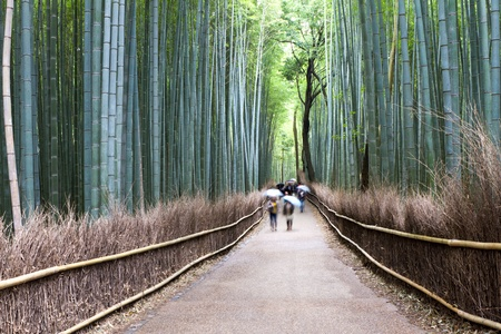bamboo forest: Bamboo Street, Kyoto, Japan
