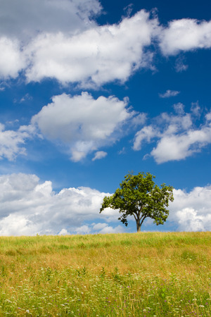 Beautiful summer landscape with a lonely tree  photo