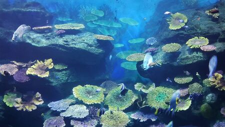 coral colony: The under water world