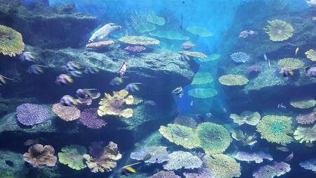 deep water: The under water world