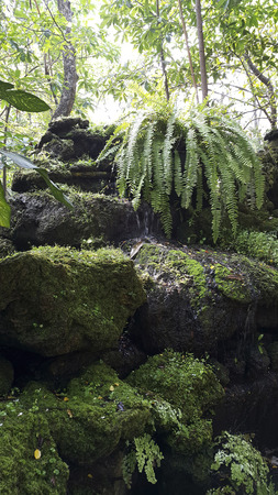 dankness: The tropical garden with fern & lichens in moisture Stock Photo