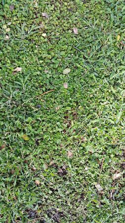 unwanted flora: The texture of cover crop and grasses