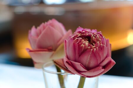 Purple-pink lotus in a clear glass of water, placed on the food table in the restaurant to add freshness to the dining atmosphere.