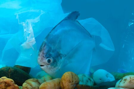 Disposal of waste into water sources, such as plastic bags, is non-biodegradable, causing pollution and is harmful to aquatic animals and ecological systems.