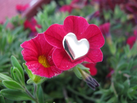 loveheart: Loveheart in flower Stock Photo