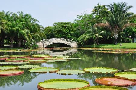 Royal Water Lily photo