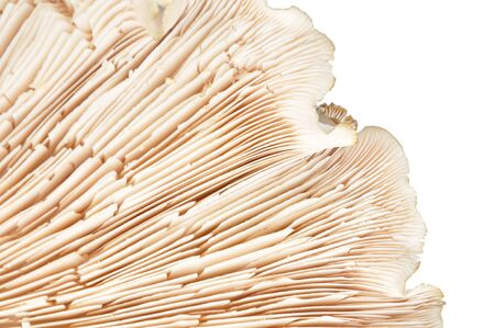 mycology: Detail mushrooms bottom isolated on a white background