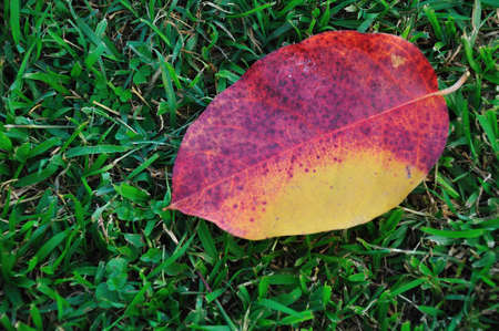 Autumn leaves on green grass photo