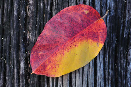 Autumn leaves on old wooden photo