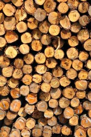woodpile: Section of the circular timber