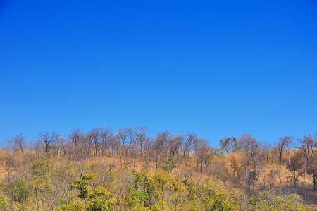 Dried tree on blue sky photo