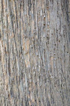 Texture shot of brown tree bark photo