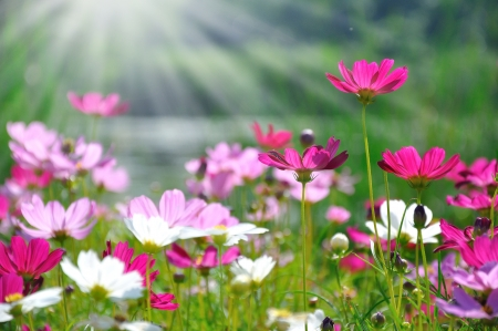 Colorful daisies in grass field with green background photo