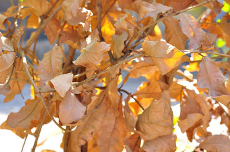 Dried leaves for background photo
