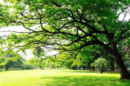 Takken grote boom met verse bladeren op groene weide in zonnige dag Stockfoto