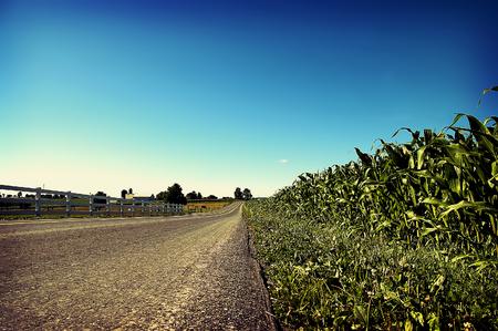Road Through Corn Field