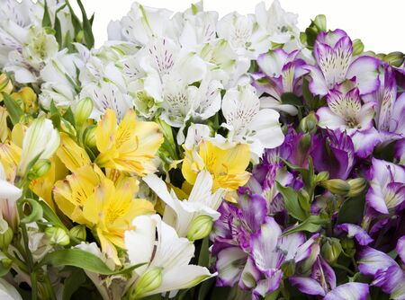 iridaceae: Bouquet from Sword Lilies, multicolored