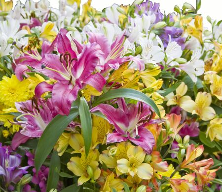 iridaceae: Bouquet from Lilies and sword lilies, multicolored Stock Photo