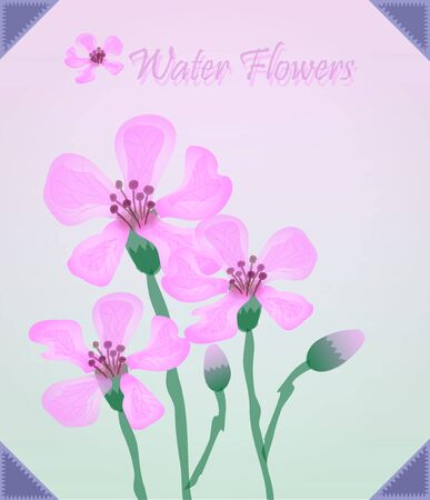 colorize: Pink Flowers in frame