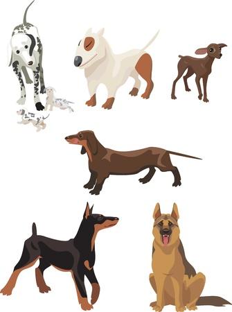 dalmata: cani Vettoriali