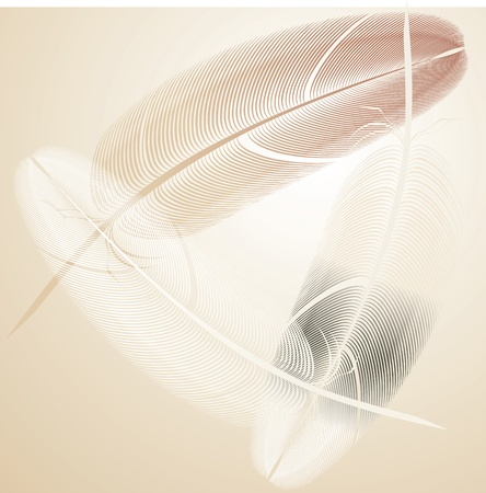 bird feather vector Vector