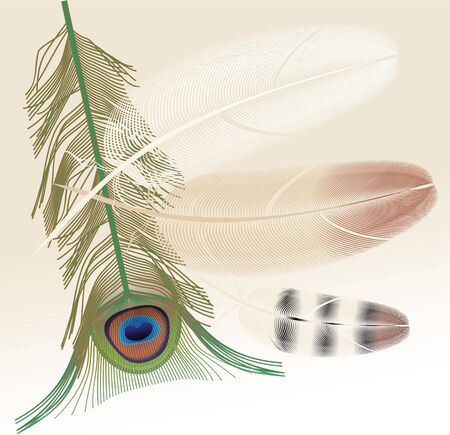peacock feather vector colored Stock Vector - 12084337