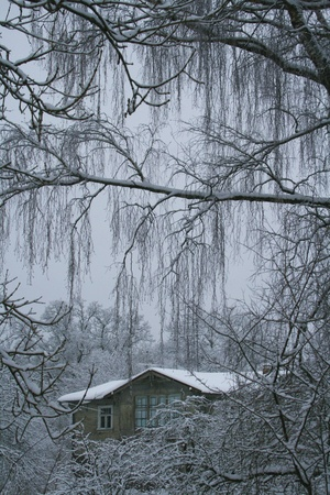 mysterious winter view with trees and house photo