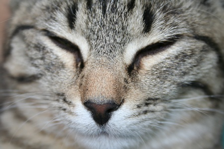 cat face with closed eyes photo