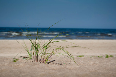 plant on beach sand with sea in background Stock Photo