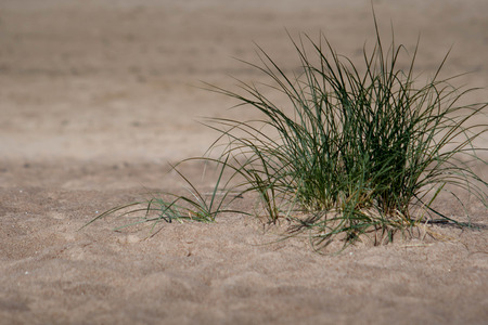 plant on hot beach sand in summer day Stock Photo