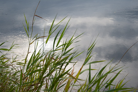river grass with evening sky and clouds reflection in water in stillness mood Stock Photo