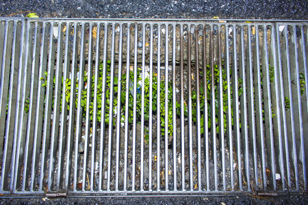 cesspool: street drain in the city with its dirty and includes planted green bush Stock Photo