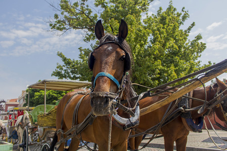 horse cart: horse cart and barouche under blue sky