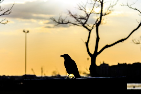reverse: Crow standing on the sign during the sunset reverse light image for design