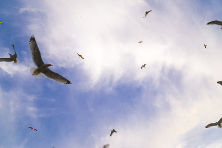 View of too many seagulls with blue sky Stock Photo
